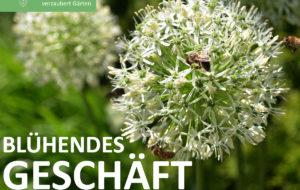 Gartenzauberwerk - Stellenanzeige_franchise (3)